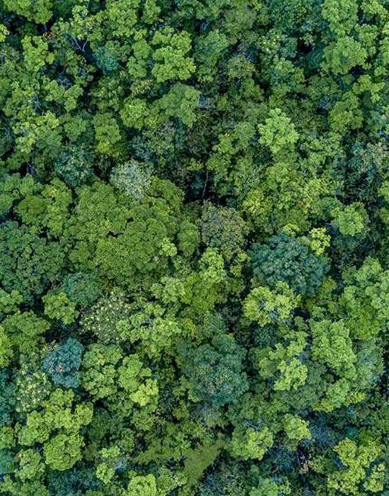 Rubirosa Nachhaltigkeit